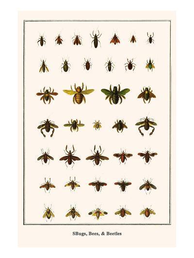 Bugs, Bees, and Beetles-Albertus Seba-Art Print