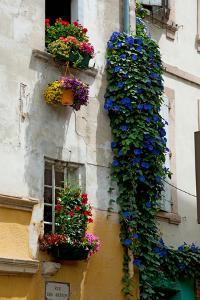 Building with Flower Pots on Each Window, Rue Des Arenes, Arles, Bouches-Du-Rhone