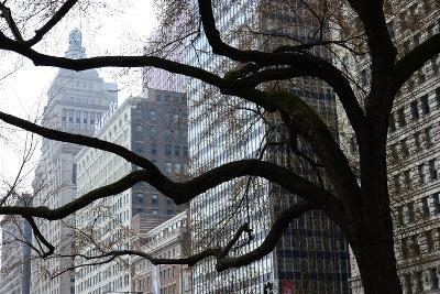 Buildings on Michigan Avenue Through a Leafless Tree in Early Spring-Paul Damien-Photographic Print