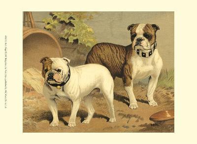 Bull Dogs-Vero Shaw-Art Print