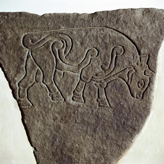Bull motif on Pictish incised stone, Burghead, Moray, Scotland, c6th - 7th century. Artist: Unknown-Unknown-Giclee Print