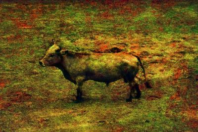 Bull-Andr? Burian-Photographic Print