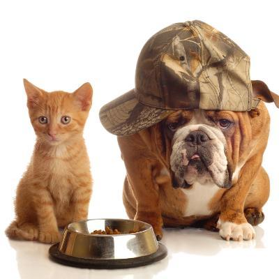 Bulldog and Cat at Food Dish Together-Willee Cole-Photographic Print