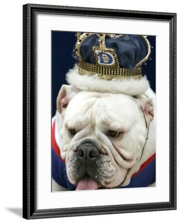 Bulldog Beauty-Charlie Neibergall-Framed Photographic Print