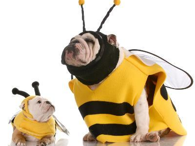 Bulldog Bee Mother And Daughter-Willee Cole-Photographic Print