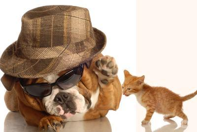 Bulldog Gangster With Kitten-Willee Cole-Photographic Print