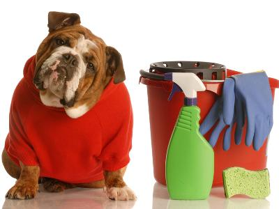 Bulldog In Red Sweater With Cleaning Supplies-Willee Cole-Photographic Print