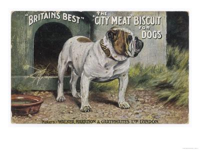 """Bulldog Stands Outside His Kennel in an Advertisement for """"City Meat"""" Dog Biscuits--Giclee Print"""