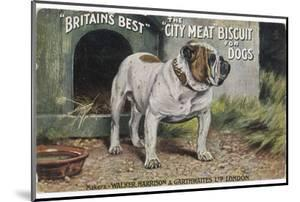 "Bulldog Stands Outside His Kennel in an Advertisement for ""City Meat"" Dog Biscuits"