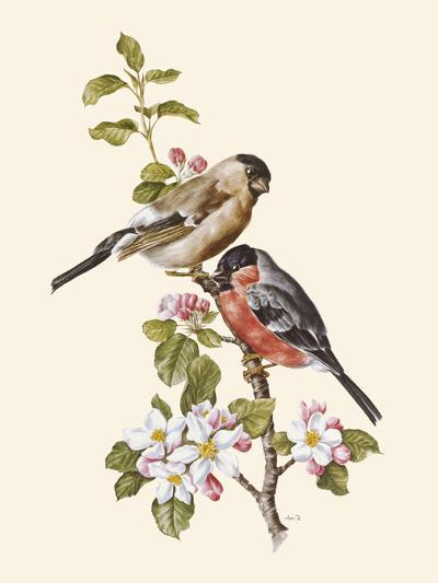 Bullfinch-Anatole Marlin-Giclee Print