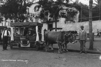 Bullock Carriage, Madeira, Portugal, C1920Ss-C1930s--Photographic Print