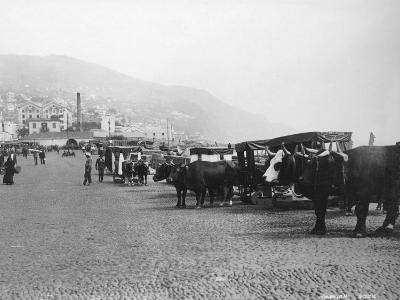 Bullock Carriages, Madeira, Portugal, C1920s-C1930s--Photographic Print