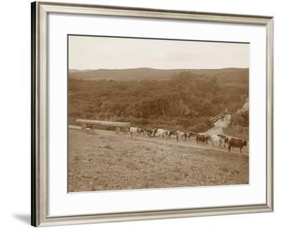 Bullock Team with a Log--Framed Photographic Print