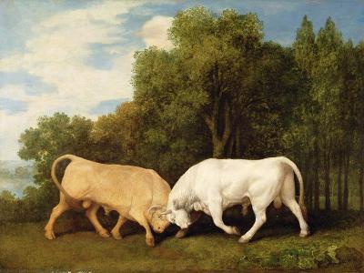 Bulls Fighting, 1786 (Oil on Panel)-George Stubbs-Giclee Print