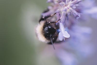 https://imgc.artprintimages.com/img/print/bumblebees-and-bees-at-the-work_u-l-q1ezgya0.jpg?p=0