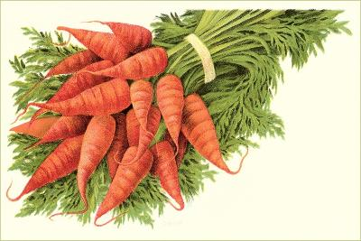 Bunch of Carrots--Art Print