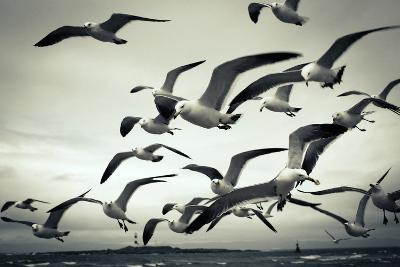 Bunch of Seagulls-moaan-Photographic Print