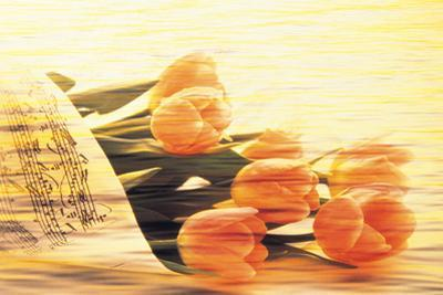 Bunch of Tulips and Sheet Music, Digitally Composite