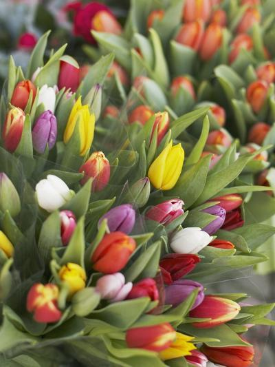 Bunches of colorful tulips-Markus Altmann-Photographic Print