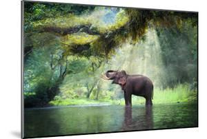 Wild Elephant in the Beautiful Forest at Kanchanaburi Province in Thailand, (With Clipping Path) by bundit jonwises