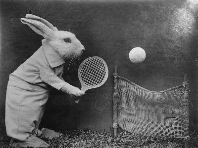 Bunny Tennis--Photographic Print