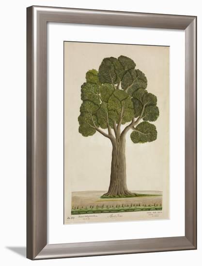 Bur Tree, 1800-10--Framed Giclee Print