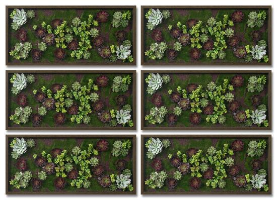 Burgundy Succulent Garden Set--Alternative Wall Decor