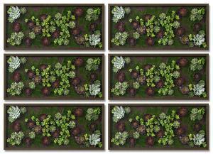Burgundy Succulent Garden Set