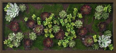 Burgundy Succulent Garden--Dimensional Product