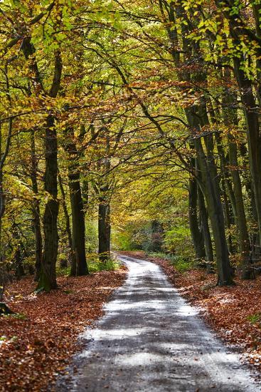 Burnham Beeches, Buckinghamshire, England, United Kingdom, Europe-Mark Mawson-Photographic Print