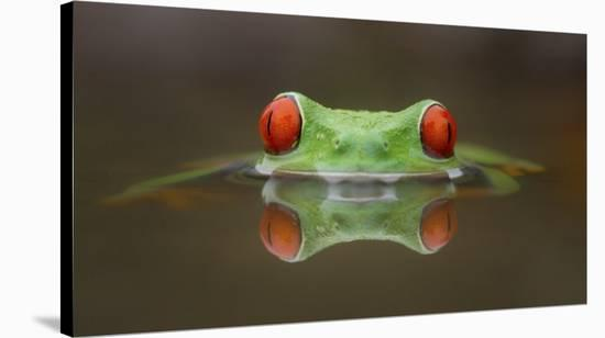 Burning Eyes-Kutub Uddin-Stretched Canvas Print