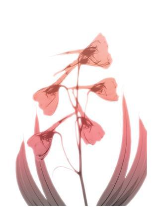 https://imgc.artprintimages.com/img/print/burning-phoenix-2_u-l-f8vya00.jpg?p=0