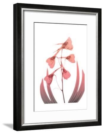Burning Phoenix 2-Albert Koetsier-Framed Art Print