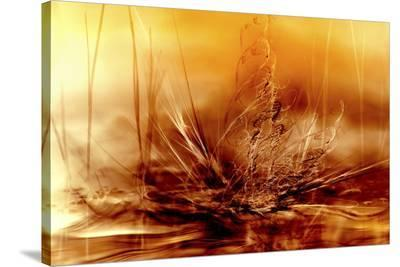 Burning Water-Willy Marthinussen-Stretched Canvas Print