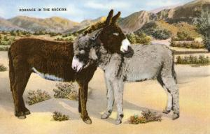 Burros Snuggling, Romance in the Rockies