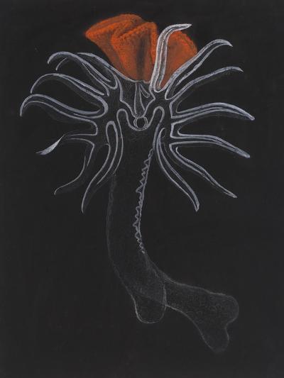 Burrowing Anemone-Philip Henry Gosse-Giclee Print