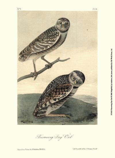 Burrowing Day Owl-John James Audubon-Art Print