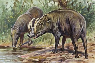 https://imgc.artprintimages.com/img/print/buru-babirusa-or-golden-babirusa-babyrousa-babyrussa-suidae_u-l-pve64z0.jpg?p=0