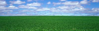 Bush Bean Field, Mcminnville, Oregon, USA--Photographic Print