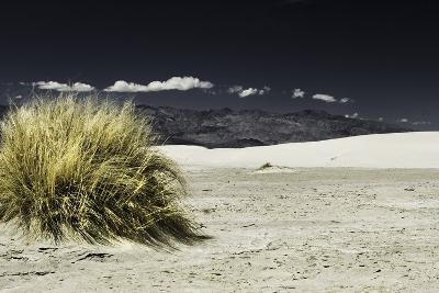 Bush Death Valley- RJPhotography-Photographic Print