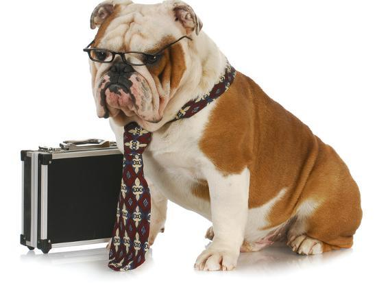 Business Dog - English Bulldog Male Wearing Tie And Glasses Sitting Beside Briefcase-Willee Cole-Photographic Print
