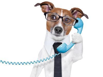 Business Dog On The Phone-Javier Brosch-Photographic Print