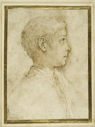 Bust of a Boy in Profile to the Right-Parmigianino-Giclee Print