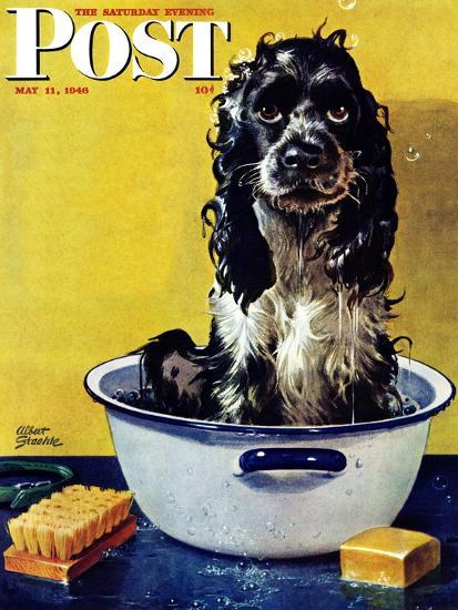 """""""Butch Gets a Bath,"""" Saturday Evening Post Cover, May 11, 1946-Albert Staehle-Premium Giclee Print"""
