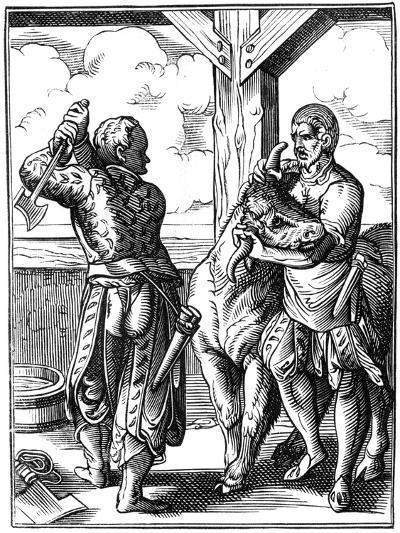 Butcher, 16th Century-Jost Amman-Giclee Print