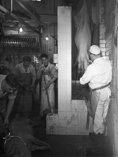 Butchery Factory, Rawmarsh, South Yorkshire, 1955-Michael Walters-Photographic Print