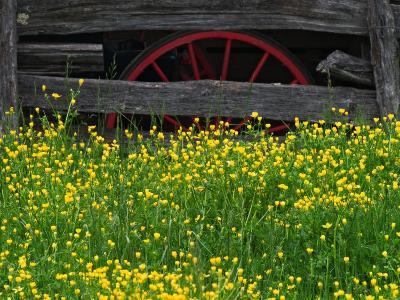 Buttercups and Wagon Wheel, Pioneer Homestead, Great Smoky Mountains National Park, North Carolina-Adam Jones-Photographic Print