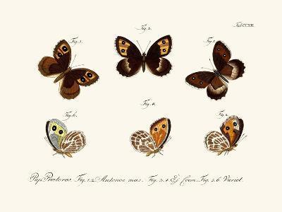 Butterflies, 1783-1806--Giclee Print