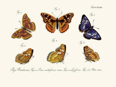 https://imgc.artprintimages.com/img/print/butterflies-1783-1806_u-l-pvqef80.jpg?p=0