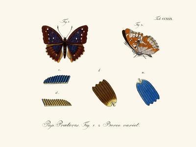 https://imgc.artprintimages.com/img/print/butterflies-1783-1806_u-l-pvqege0.jpg?p=0